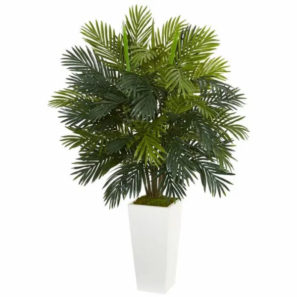 Areca_palm_indoor_air_purifier_plant