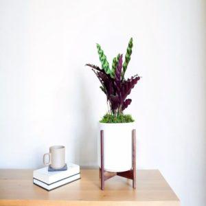 Medium-to-Bright Light Plants