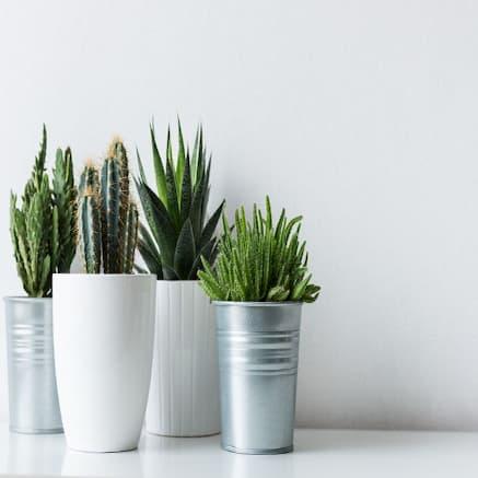 Combos_indoor_plants_airifier