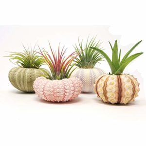 Great Plant Gifts