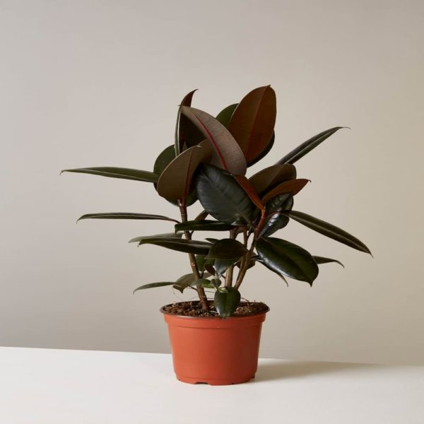 rubber_indoor_plant_air_purifier
